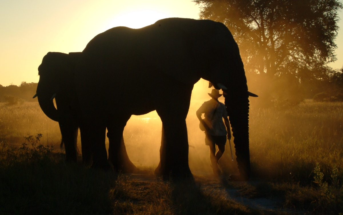 Walking with elephants at Sanctuary Baines' Camp