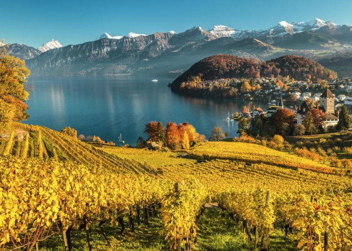 The UNESCO protected Lavaux hillside vineyard is the largest contiguous vineyard region in Switzerland.