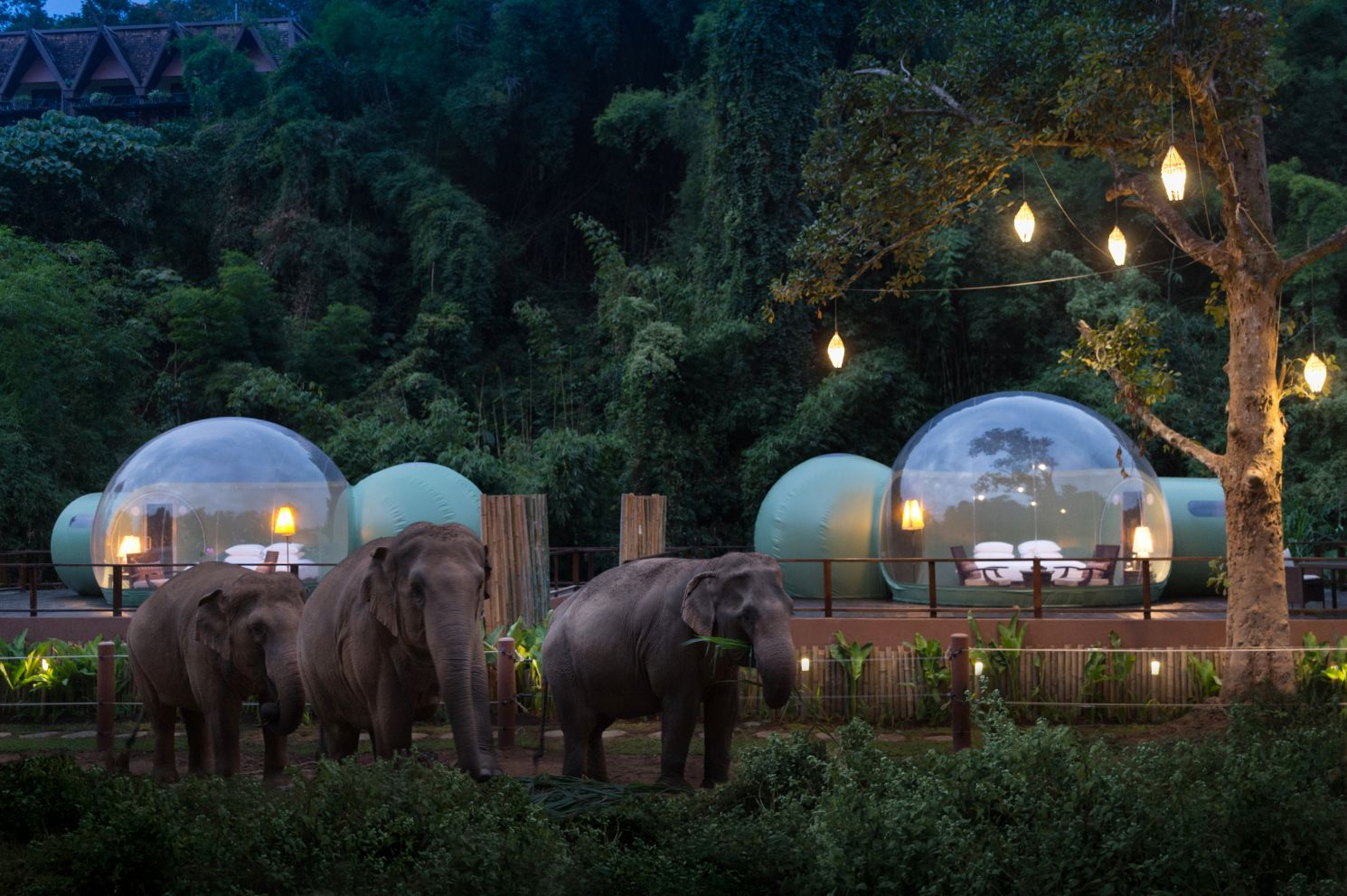Jungle Bubbles at Dawn, Anantara Golden Triangle Elephant Camp & Resort, Thailand