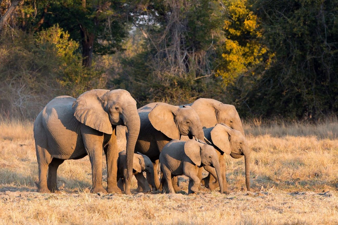 Elephant Family, Jenman Safaris